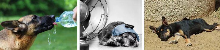 как да охладим кучето котето в жегите