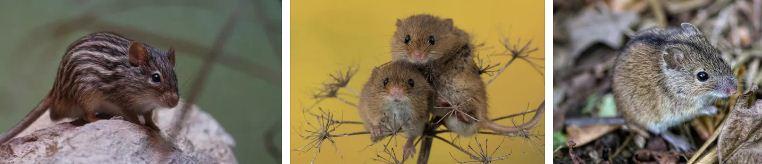 мишки съновник и поличби