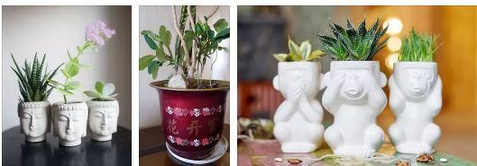 бяла магия за сбъдване на желание с растение