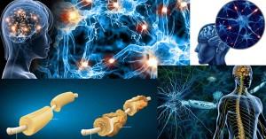 Дисеминирана, мултипленна или множествена склероза
