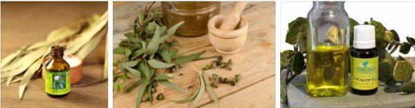 евкалиптово масло ароматерапия