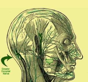 мъдрец болки в главата