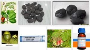 anacardium orientale анакардиум ориентале