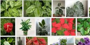 отровни стайни растения