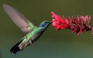 Животински тотем: Колибри