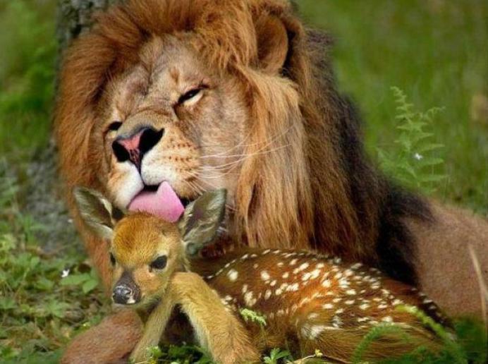 Вижте най-яките ТОП 10 СНИМКИ с животни за 2011 година!