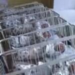Вижте чудо на чудесата! Жена роди 10 напълно доносени деца