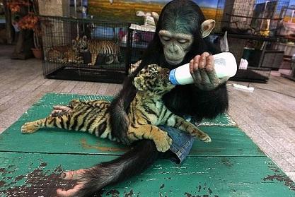 Вижте най-яките СНИМКИ с животни за 2011 година!