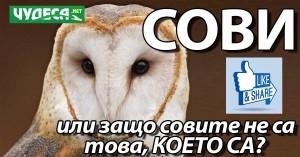 сови или защо совите изобщо не са онова, което са?