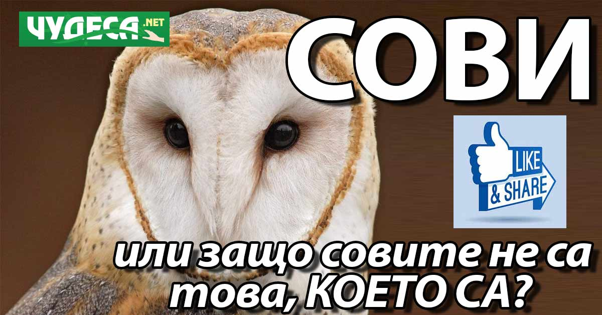 """Интересни факти за совата. Защо точно совите """"не са това, което са""""?"""