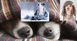 до каква температура издържат кучетата, студено ли им е?