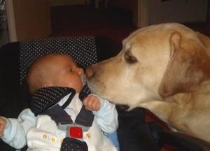кражба на кучета