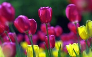 Пролет без пролетни цветя?