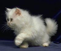 Бяла котка в съня - богатство