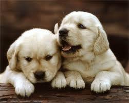малки кученца