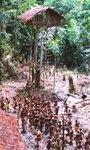короваи живот на дърво