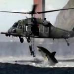 kr-акула