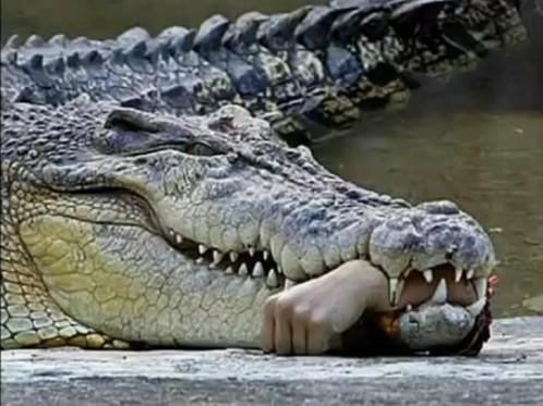 Вижте чудовище убиец!