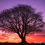 15_19_1-Tree-Sunrise-Northumberland_web-150x150