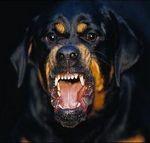 бясно куче