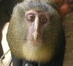 Две в едно - маймуна с човешко лице