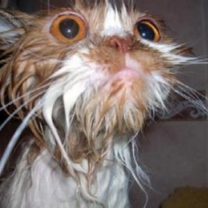 Котка оцеля и в центрофугата на перална машина