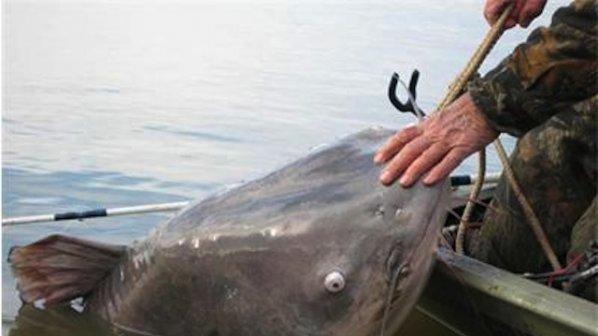 Речен хищник-чудовище хвърли в УЖАС рибарите (ФОТО)