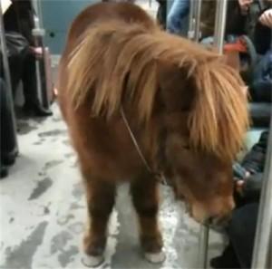 Понито Сепи е герой на видео