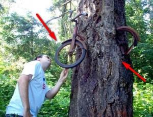 bike-in-tree-0
