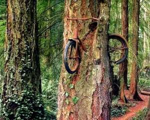 Дърво погълна велосипед