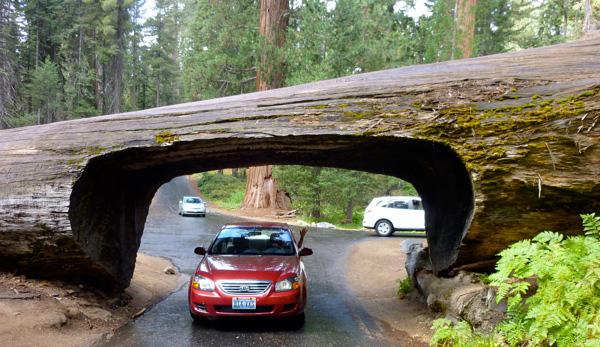 ВИЖТЕ най-невероятните и странни тунели през дърво!
