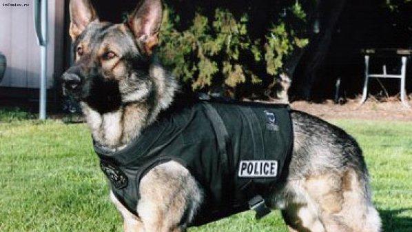 Полицейско куче спаси 89-годишен старец