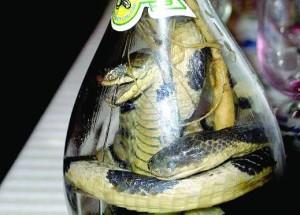 Змиите са и ястие, и лекарство, и напитка