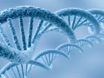Произнесените думи влияят непосредствено върху молекулите на ДНК