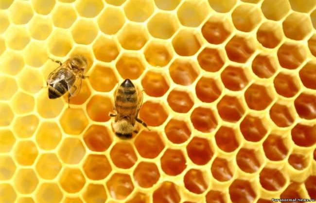 Пчелите продължават да измират, както Баба Ванга предсказваше! (ВИДЕО)