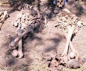 изровиха кости на 4-метрови великани
