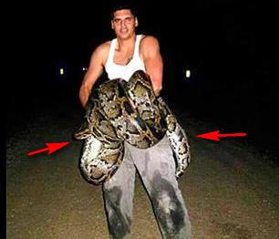 Младеж уби 5,8 метра питон, най-големият в света! (ВИДЕО+СНИМКИ)