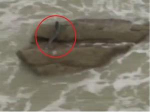 Жива русалка пори водите на морето. Учените са с изблещени от изненада очи!