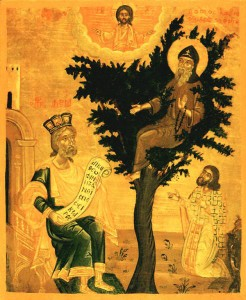 Преп. Давид седи в короната на бадемовото дърво