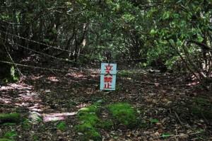 Гората на самоубийците Аокихара