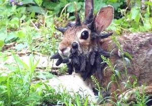 Рогат заек!? Това не може да бъде!