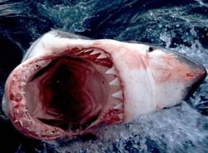 Огромната акула