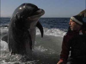 Озверял делфин опита да убие плувкиня