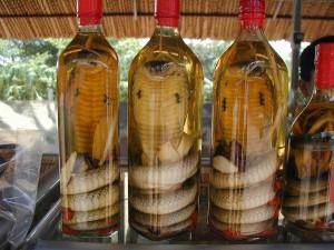 Традиционното лекарство за всичко - змия в бутилка с ракия или вино