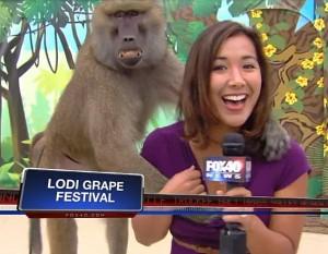 Наглият бабуин награби репортерка пред камерите