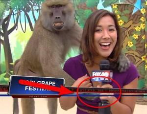 Нагъл бабуин награби журналистка