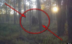 Голямата стъпка се разхожда из горите на Пенсилвания