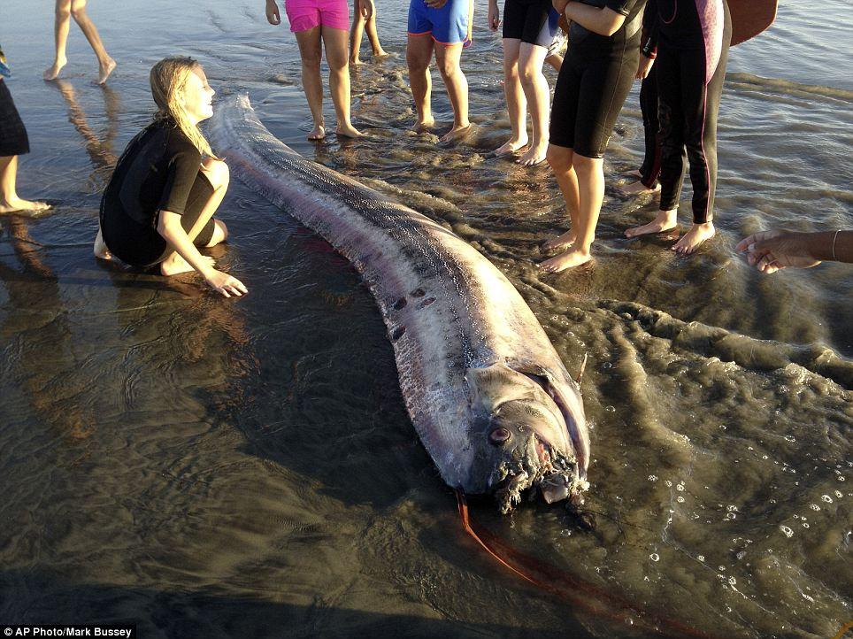 Мистерия: второ гигантско чудовище изхвърли океанът! (ВИДЕО)