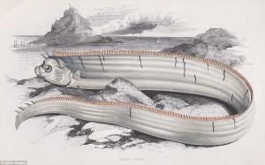 "Стара рисунка на ""морски змей"""