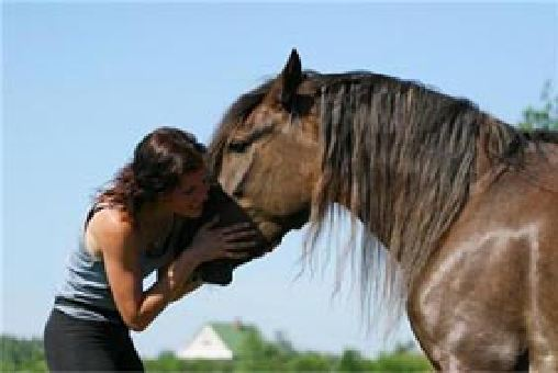 Арабин се разведе, след като съпругата му целуна кон